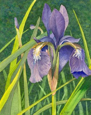 Purple Iris #1